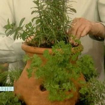 Indoor Herb Plants
