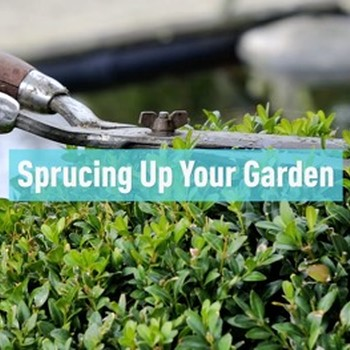 Sprucing up Your Garden