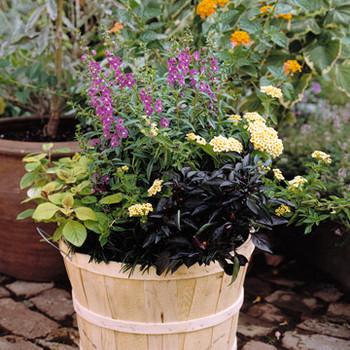 Easy Planter