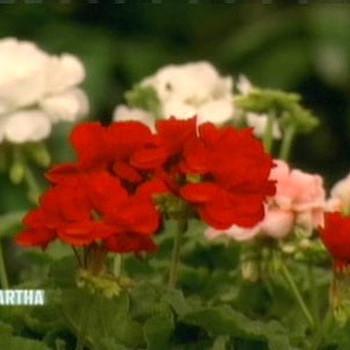 Helen Mirren Gardens