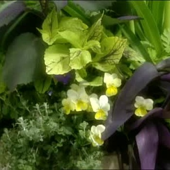 How to Plant a Large Urn