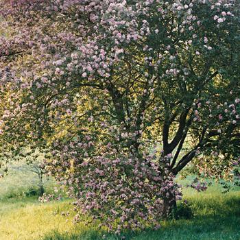 A Fleeting Abundance: Spring Flowers