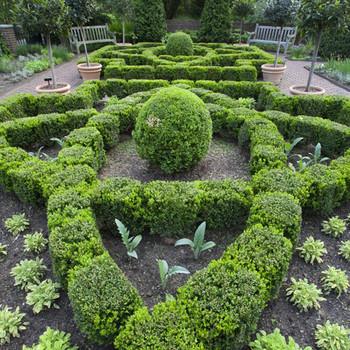 Martha's Culinary Herb Garden