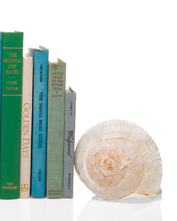 Seashell Bookends
