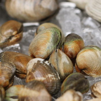 How To Clean and Prepare Clams