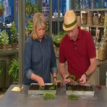 How to Make a Moss Garden