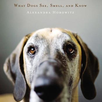 Understanding Dog Behavior with Alexandra Horowitz