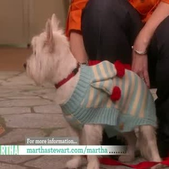 Dog Outerwear Fashion Show