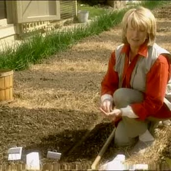 How to Plant Spring Onions