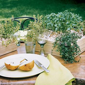 Herb Centerpieces — 2 Ways