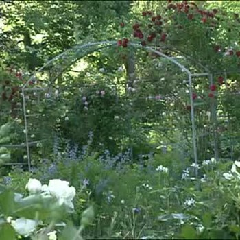 How to Install a Rose Arbor