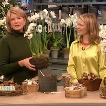 Narcissus Bulb Gift Baskets