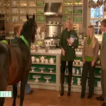 Beautiful Connemara Stallion