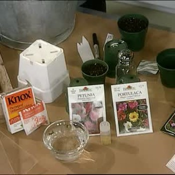 How to Grow Plants From Seed, Part 1
