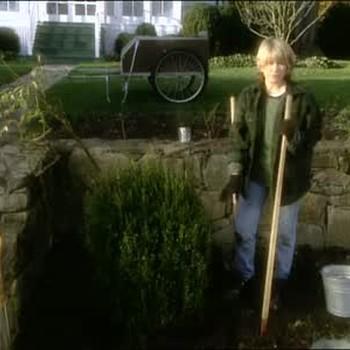 How to Plant a Boxwood Shrub