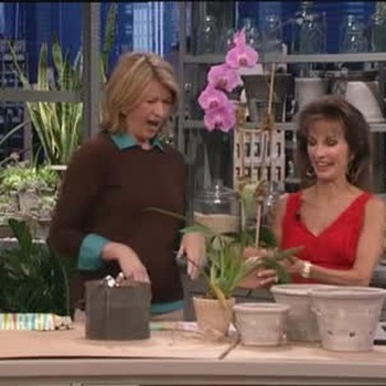 Susan Lucci Repots an Orchid