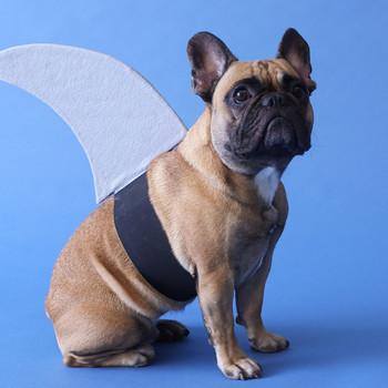 DIY Shark Fin Costume