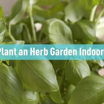 Plant an Herb Garden Indoors