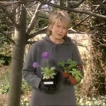 How to Plant Primrose Flowers
