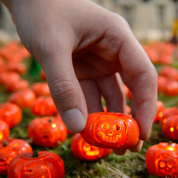 The World's Smallest Pumpkin Patch Is Completely and Totally Adorable