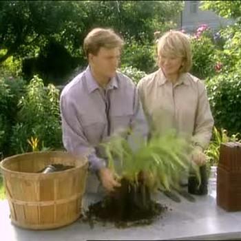 Dividing Perennials For Sharing