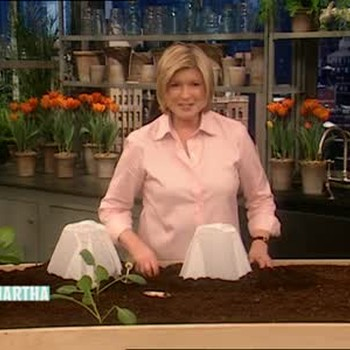 How to Prepare Spring Seedlings