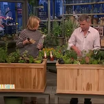 Pest Control in Organic Gardens