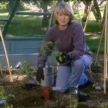 Planting Tomatoes In The Spring