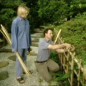 Bamboo in Japanese Stroll Garden