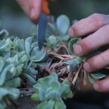 How to Plant and Grow Succulents
