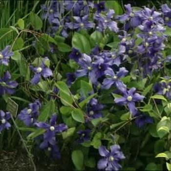 Visit to Wave Hill Flower Garden
