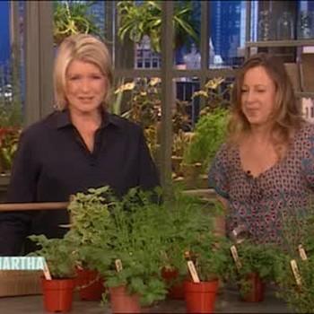 How to Grow an Edible Herb Garden