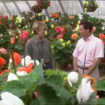How to Grow and Care for Begonias
