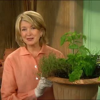 How to Plant a Potted Salad Garden