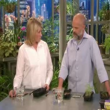 How To Start Seeds in Peat Pop Ups