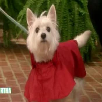 Springtime Dog Fashion Show, Part 1