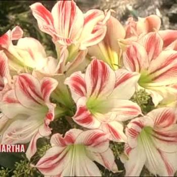 1-800-Flowers Seasonal Arrangements