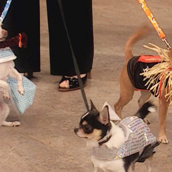 Best in Show: Halloween Dog Costumes