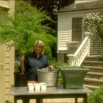 How to Plant Duranta Shrubs in Pots