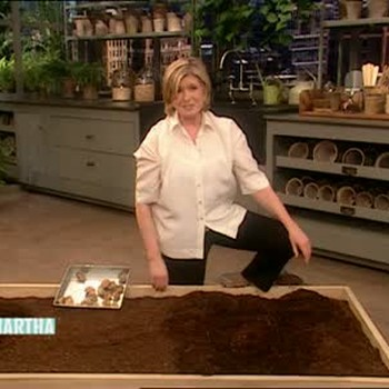 How To Plant Potatoes and Asparagus