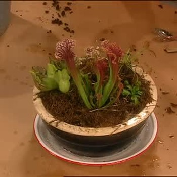 Carnivorous Garden With Peter D'Amato