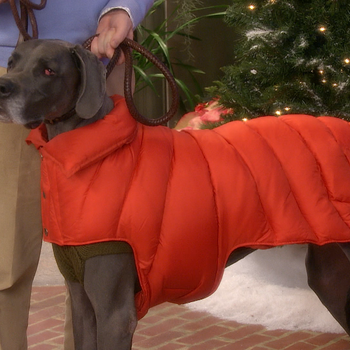 Winter-Coat Fashion Show -- for Dogs!