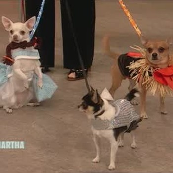 Chihuahuas As Wizard of Oz Characters