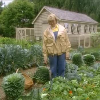 Harvesting Vegetables From The Garden