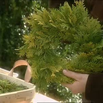 How to Make Small Arborvitae Wreathes
