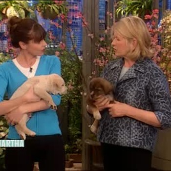 Puppy Training with Victoria Stilwell