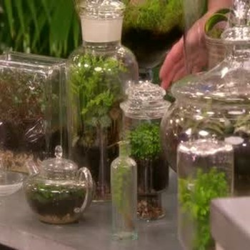 All about Terrariums with Tovah Martin