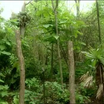 Bronx Zoo: Congo Gorilla Forest Exhibit
