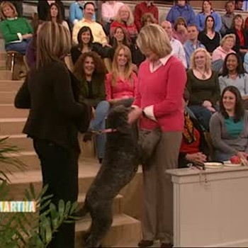 Dog Behavior Problems with Kathy Santo