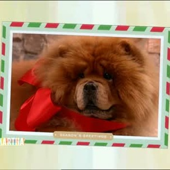 Great Pictures for Holiday Photo Cards